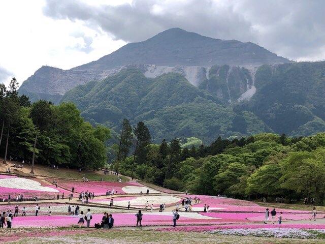 羊山公園芝桜まつり